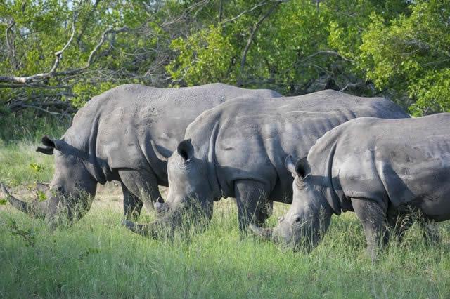 sud-africaines
