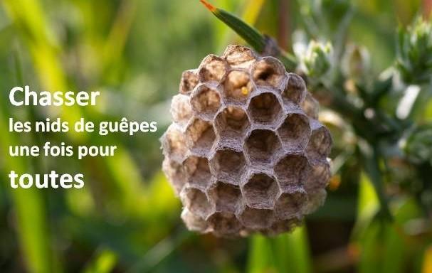 nids de guêpes